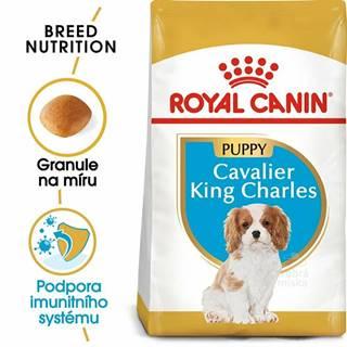 Royal Canin Breed Kavalír King Charles Junior 1,5kg
